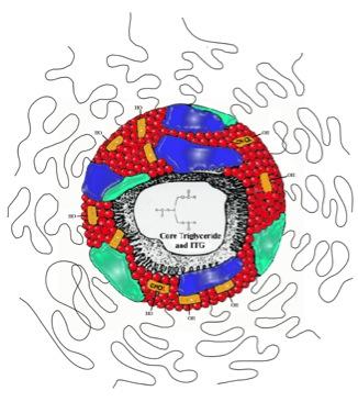 Fenestra VC Lipid Sphere