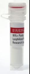 B1B2 Receptor Agonist